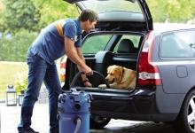 Multi_30T_car_dog
